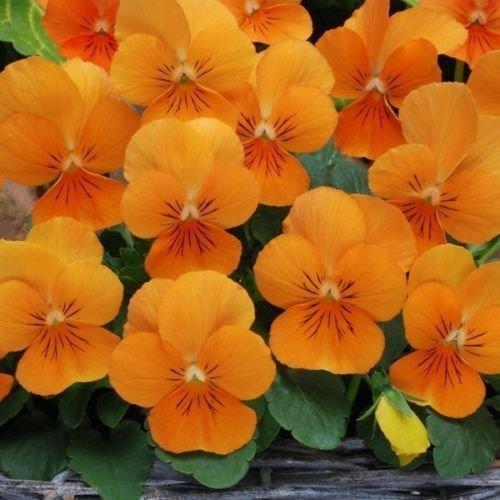 Színek a kertben – Narancssárga  ca5d009185